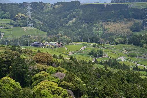 산자락에 펼쳐진 아름답고 웅장한 차밭