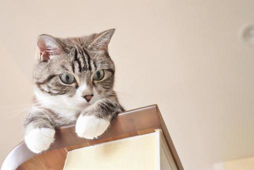 위에서 내려다 귀여운 호랑이 고양이