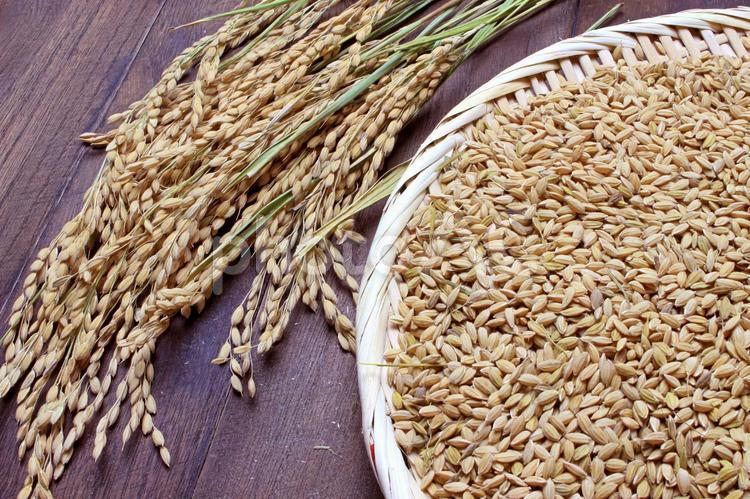 稲とモミの写真
