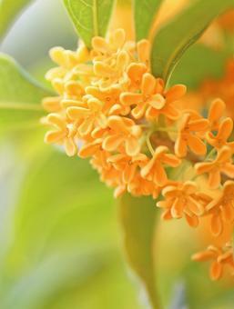 Goldbrush Golden wood sword Golden flower