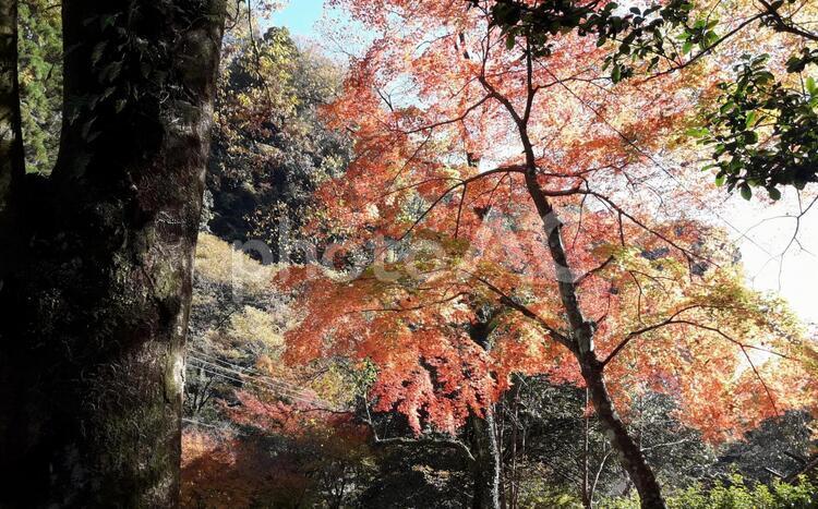秋の景色の写真