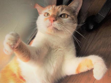 응시 고양이