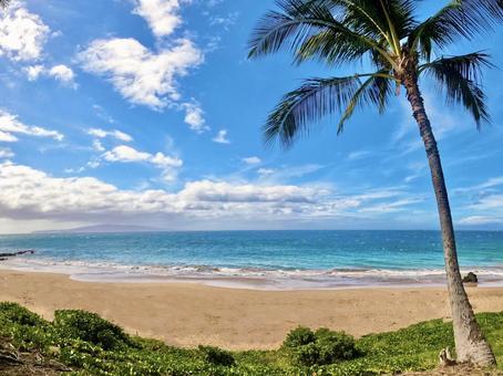 Blue Sea and Palm Trees on Maui, Hawaii
