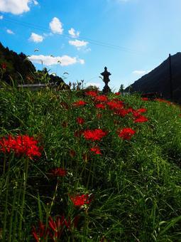 피안 꽃과 돌 도로와 푸른 하늘