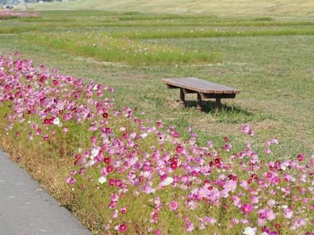 Cosmos and bench