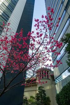 도쿄 오 사키의 도시 풍경 게이트 시티 오 사키의 고층 빌딩 군