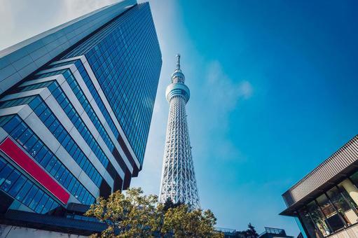 Tokyo Sky Tree (Sumida Ward)