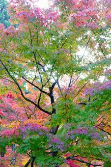 Kyoto Eikando Autumn Leaves Wallpaper