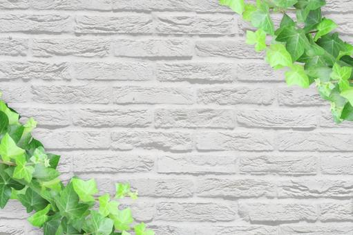 White wall and ivy background
