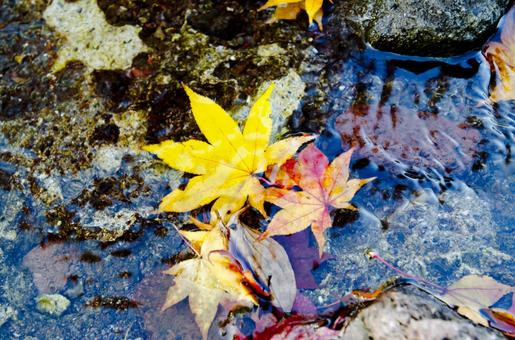 Fallen leaves of a pond 4