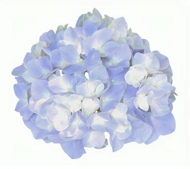Cut out material hydrangea pale white