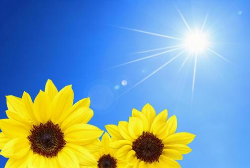 Shining sun and sunflower Summer background material