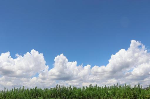 Blue sky and white clouds Meadow Cumulonimbus Summer clouds Background background