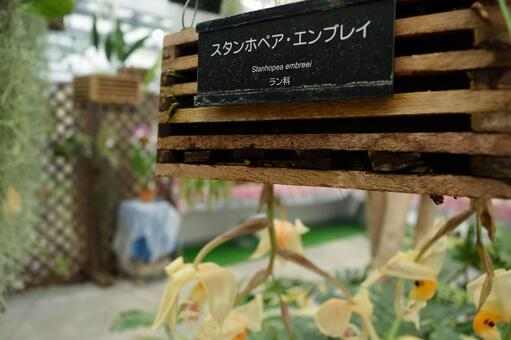 Jindai Plant Park Orchid Greenhouse Stanhope