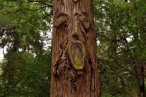 A tree that looks like the face of Amanoiwato Shrine