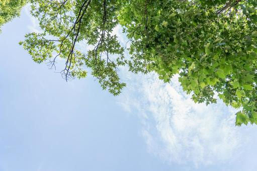 Blue sky white clouds fresh green