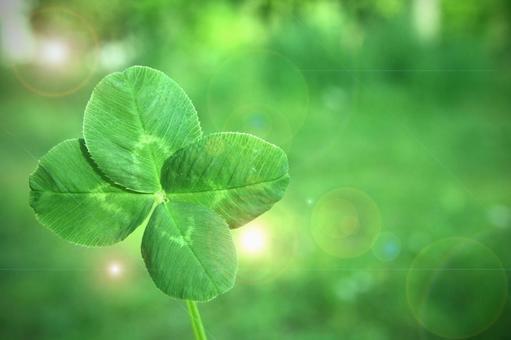 Four leaf clover _ B 01