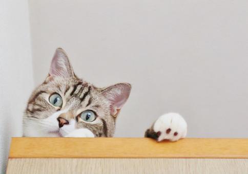고양이 고양이 고양이 고양이 이미지 응시 고양이 보는 고양이 귀여운 고양이 내려다 고양이