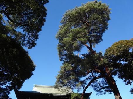 神社和樹3