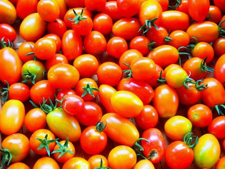 화려한 토마토