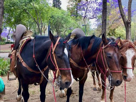 [멕시코] 공원에있는 여러 말