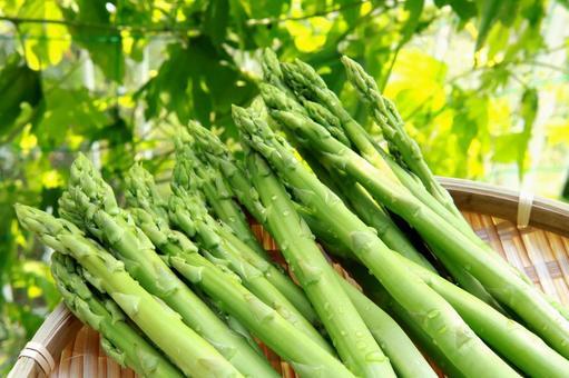 Asparagus seasonal vegetables
