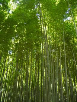 Bamboo forest E
