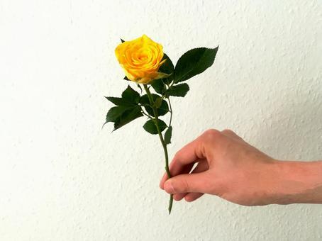 一朵黃玫瑰的男手