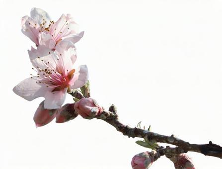 Peach _ clipping