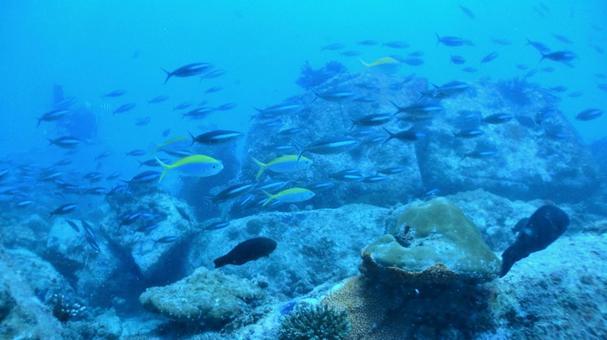 세이셸 다이빙 물고기의 무리