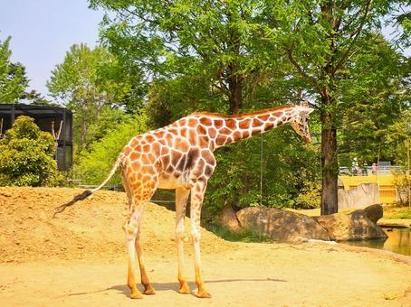 Giraffe children