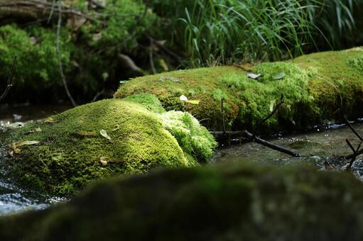 Moss and sunbeams through leaves and sprouts 2