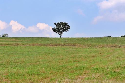 초원과 나무 한 그루