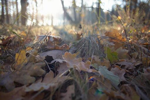 Forest ground 9