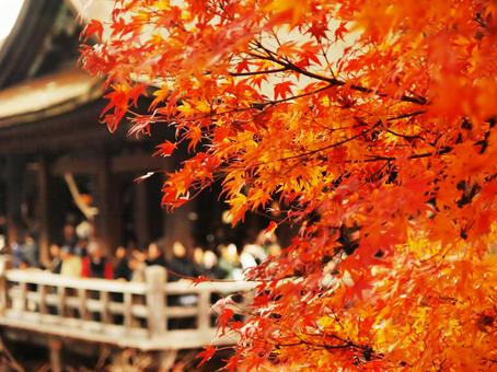 Autumn leaves of Kiyomizudera