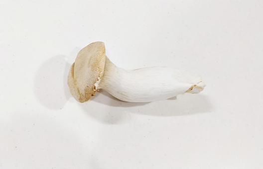 하나의 새송이 버섯