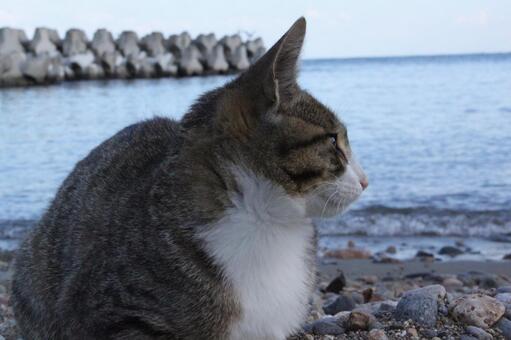 해안에 자리 잡은 고양이 (오타루시)