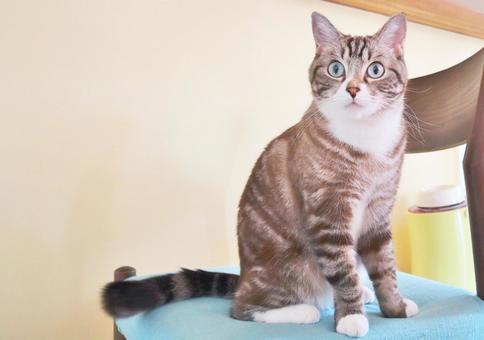 고양이 고양이 고양이 고양이의 전신 앉아 고양이의 전신 바라 보는 고양이