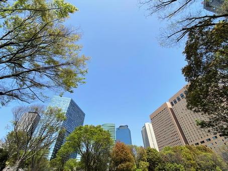 푸른 하늘 아래의 빌딩과 나무