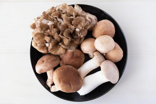 산더미 버섯