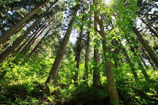 Overflowing cedar forest