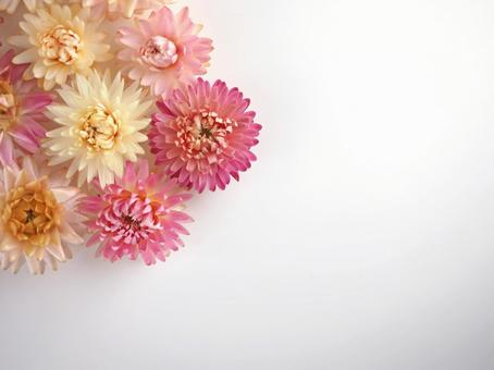 Dry Flower 01