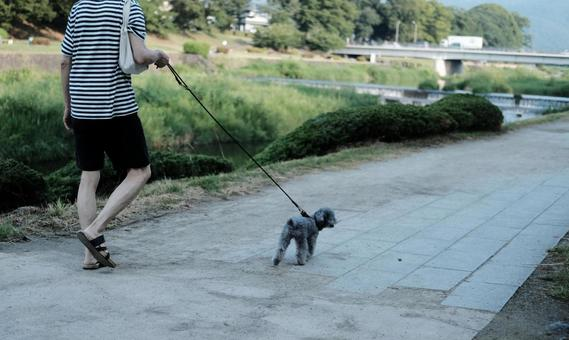 Male pet walking a dog
