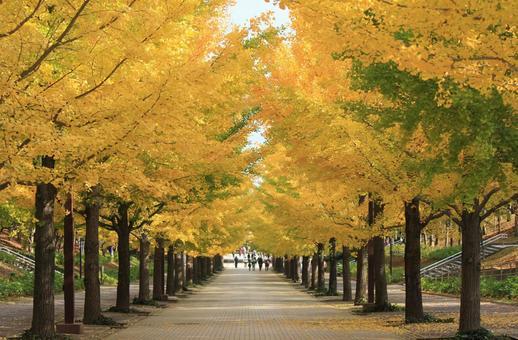 Gingko line aki _ autumn