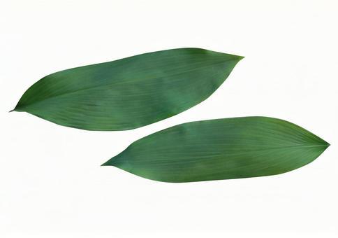 Bulb leaves