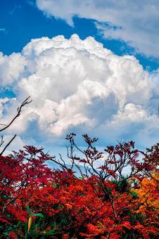 Autumn leaves and cumulonimbus (1) Search word / cumulonimbus creator name / YUTO @ PHOTOGRAPHER