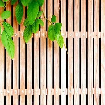 Lattice door and ivy