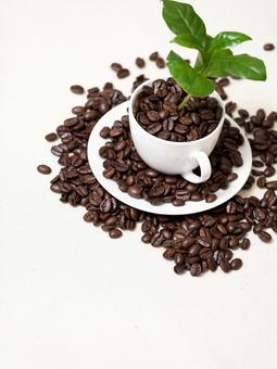 커피 나무 14