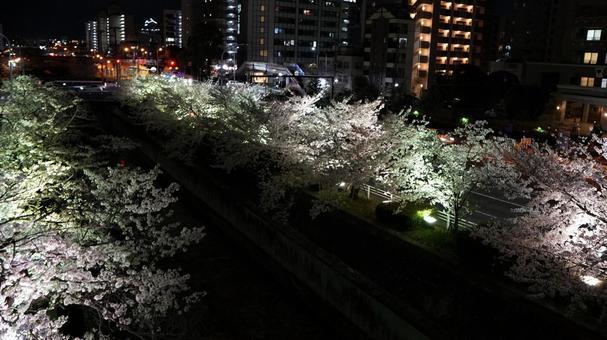 벚꽃 라이트 업