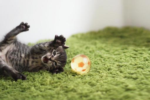 Goalkeeper kitten